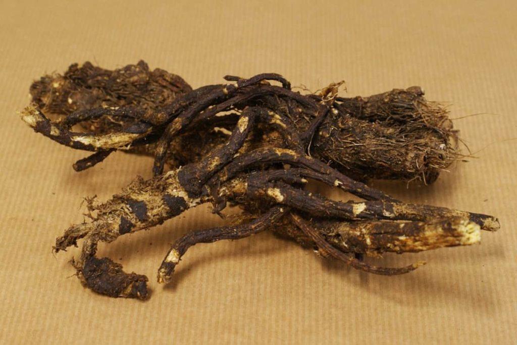 Consuming Osha Root